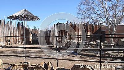 Jardim zoológico Albuquerque New mexico video estoque