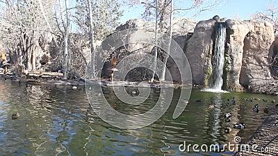 Jardim zoológico Albuquerque New mexico filme