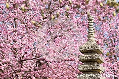 Jardin japonais avec le cerisier de floraison photos for Achat jardin japonais