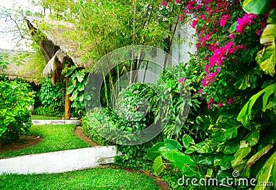 Jardin tropical images libres de droits image 24814359 for Amenagement jardin tropical