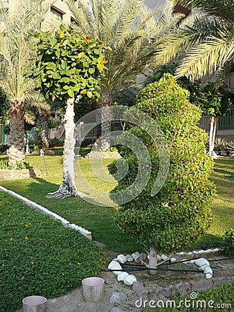 Jardin vert avec de beaux arbres et herbe de repaires for Beaux arbres de jardin