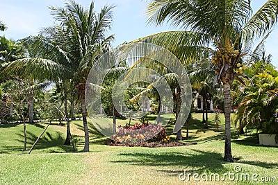 Jardín de la palma