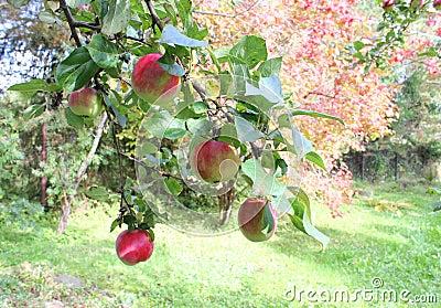 Jardín del otoño