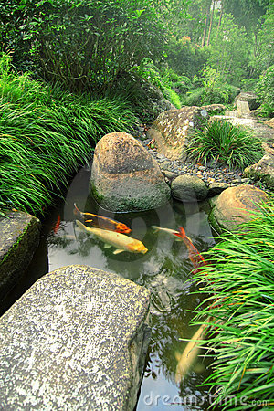 Jardín y charca japoneses de Koi