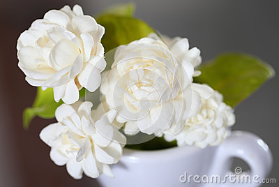 Jasmine flower (for Mother Day of Thailand)