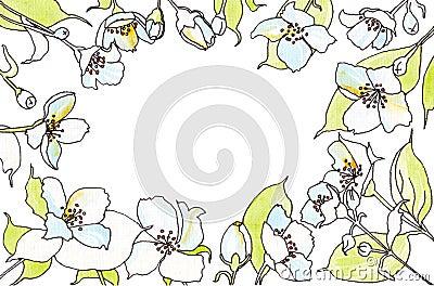 Jasmine flowers watercolor sketch Cartoon Illustration