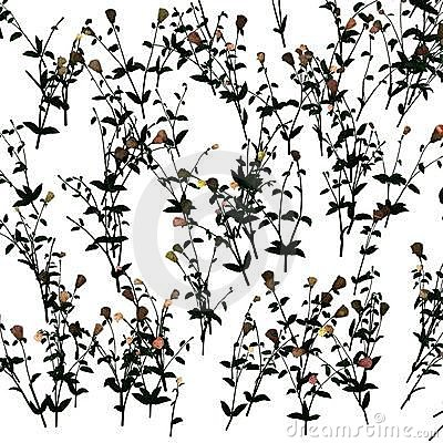 Free Jasmine Pattern Stock Photo - 4771550