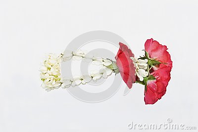 Jasmine Thai Garland isolate, Malai flower