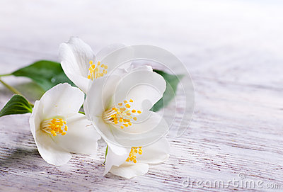 Jasmine white flower on white wood background