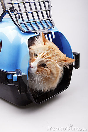Jaune de transport de chat de cadre