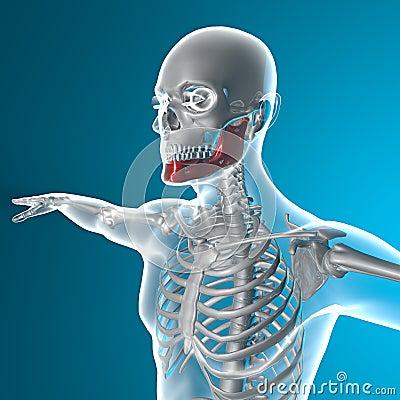 Jawbone x-ray