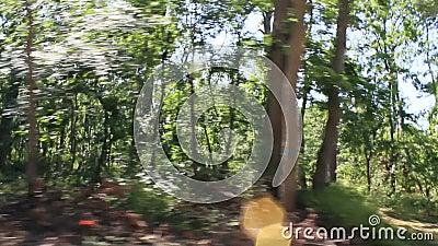 Jechać przez lasowego materiału filmowego zdjęcie wideo