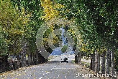 Jeep en el camino del otoño