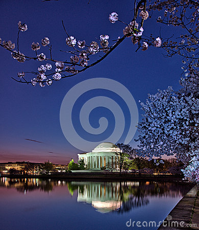 Jefferson Memorial framed by cherry blossoms at sunrise