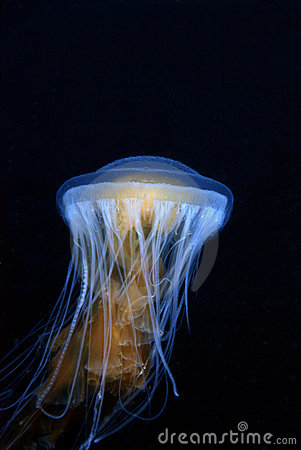 Free Jellyfish Royalty Free Stock Image - 3180656