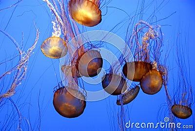 Jellyfish chaos