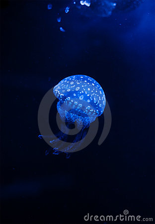 Jellyfish in the dark water with lights