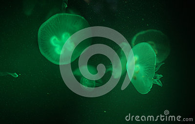 Jellyfish in green background