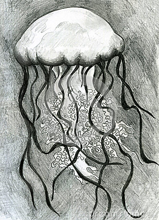 Jellyfish pencil sketch