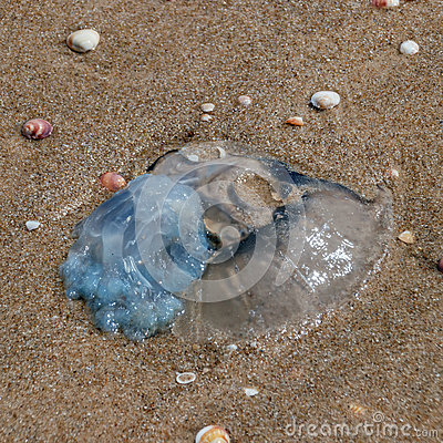 Free Jellyfish Stranded Ashore Royalty Free Stock Images - 94317389
