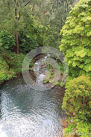 Jenolan River downstream