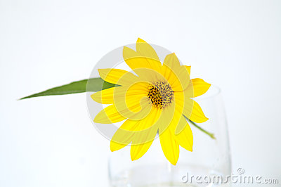 Jerusalem Artichoke flower in a glass vase