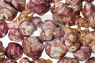 Jerusalem artichoke- stock image