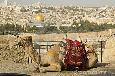 Jerusalem old city with a camel