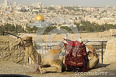 Jerusalem old city with a camel
