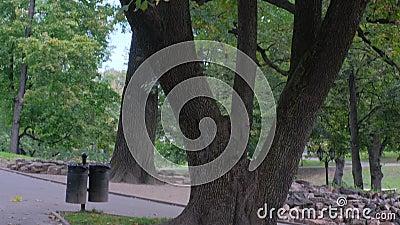 Jesień w parku miejskim Kolorowe liście na zielonej trawie Czarny kosz na śmieci w pobliżu drzewa Scena przyrody piękności w sezo zbiory wideo