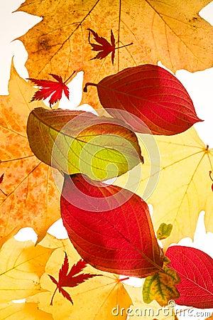 Jesień kolorowi liść