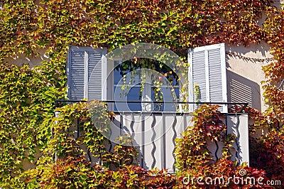 Jesień liścia okno