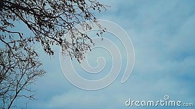 Jesienne drzewo przed niebieskim niebem z chmurami zdjęcie wideo