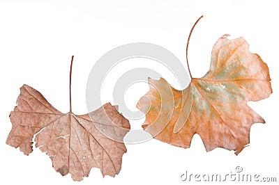 Jesienni liść