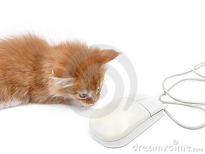 Jeu De Souris De Chaton D'ordinateur Photo stock - Image: 9591270