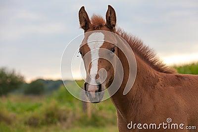Jeune cheval