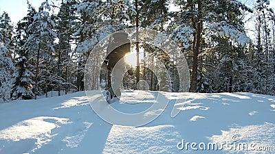 Jeune femme avec la caméra professionnelle de photo dans la forêt d'hiver banque de vidéos