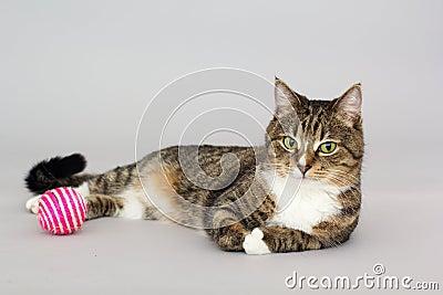 jeux de chat tigr avec la boule photo stock image 67842127. Black Bedroom Furniture Sets. Home Design Ideas