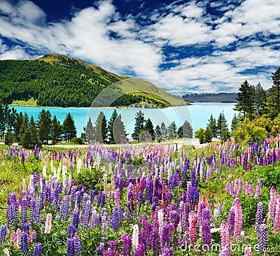 Jeziorny nowy tekapo Zealand