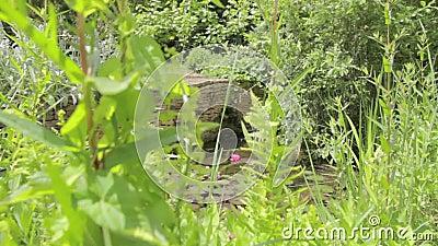 Jib strzał staw w ogródzie zbiory wideo