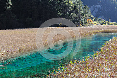 Jiuzhaigou reed lake