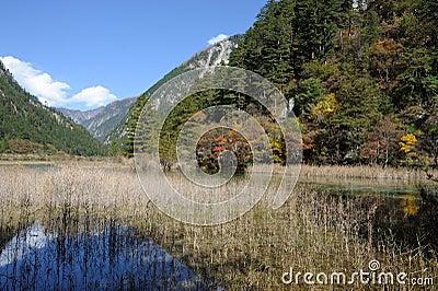 Jiuzhaigou reed lake