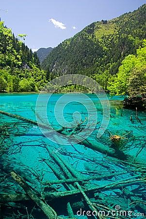 Free Jiuzhaigou Wuhua Pool Royalty Free Stock Images - 22247399