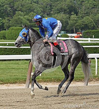 Jockey John Velazquez and Paraiba Editorial Photo