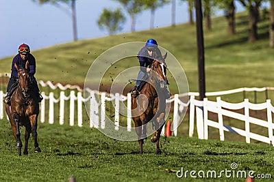 Jockeys Horses Sprint Training  Editorial Photo