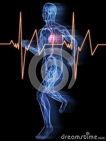 Free Jogger - Vascular System Stock Photo - 8855480