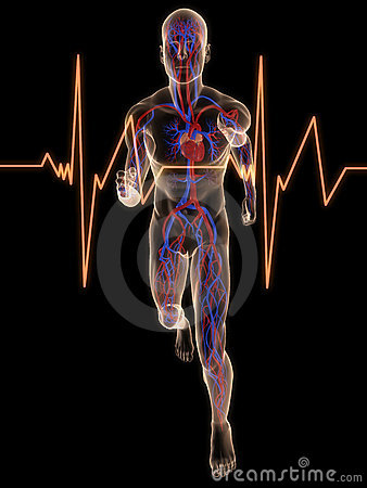 Free Jogger - Vascular System Royalty Free Stock Images - 8855529