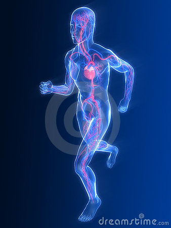 Free Jogger - Vascular System Stock Images - 8855674