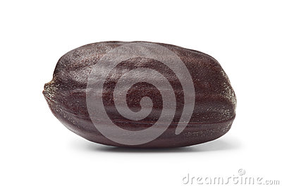 Jojoba seed Stock Photo
