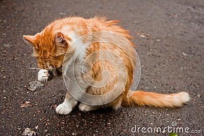 Jonge kat